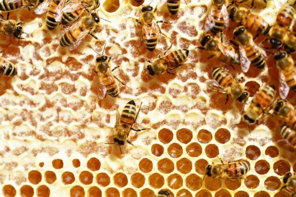 api su favo di miele