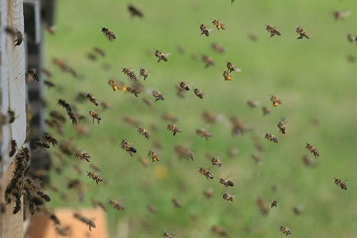 bees 1975820 340