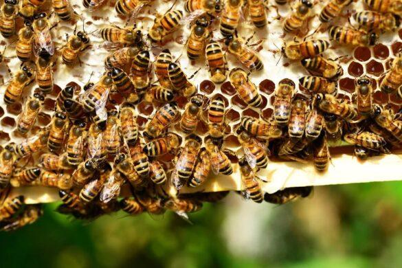 honey bees 401238 960 720