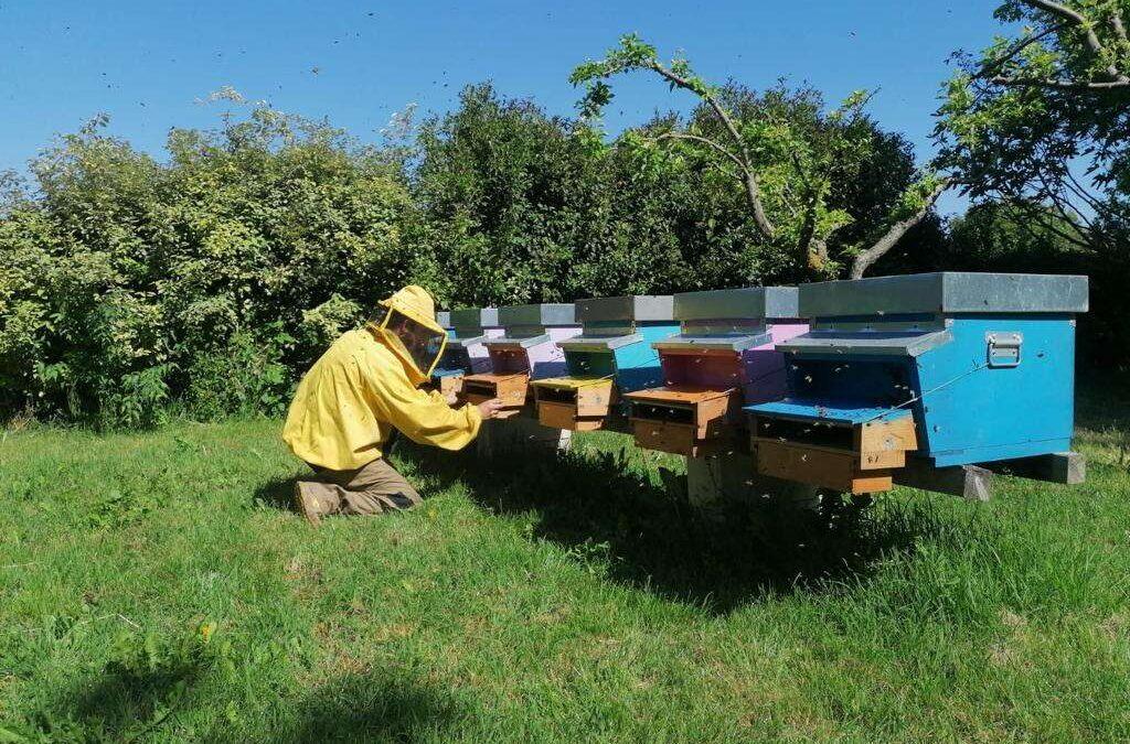 Progetto sperimentale ERSAF – Associazioni Apistiche, per il monitoraggio del polline