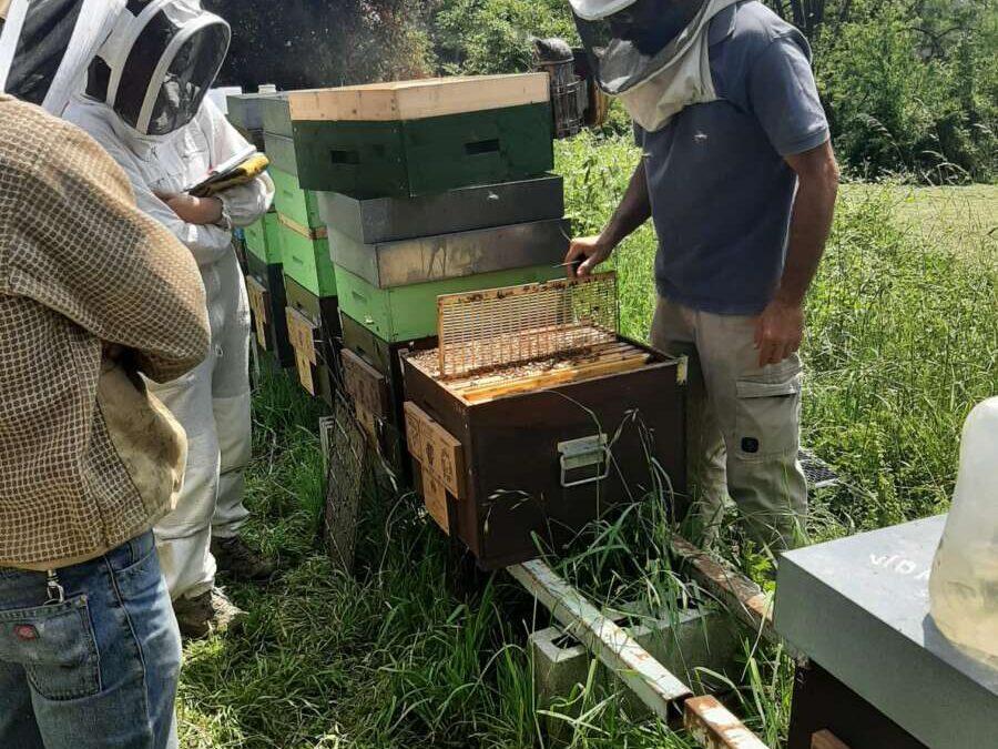 18 e 24 luglio – Seminari di lotta alla Varroa e logistica aziendale in provincia di Bergamo
